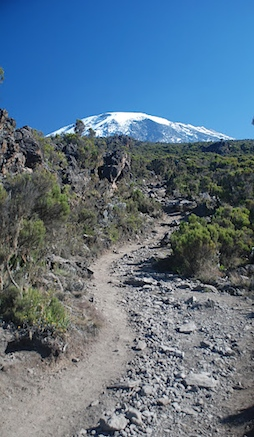 A picture of Kilimanjaro's snow-topped Kibo summit, taken from near Millennium Camp on the Mweka descent route.