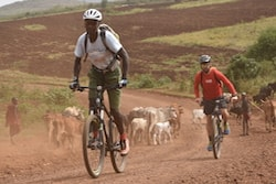 Two cyclists biking on a dusty road past Maasai goat herders