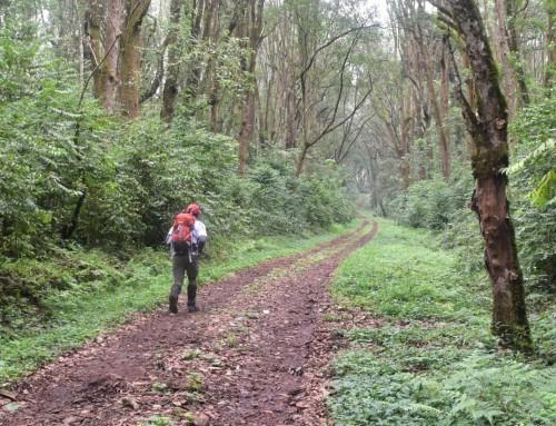Climbing Kilimanjaro in the rainy season – is it worth it?