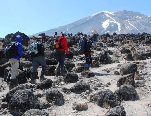 Join us in a virtual Kilimanjaro climb!